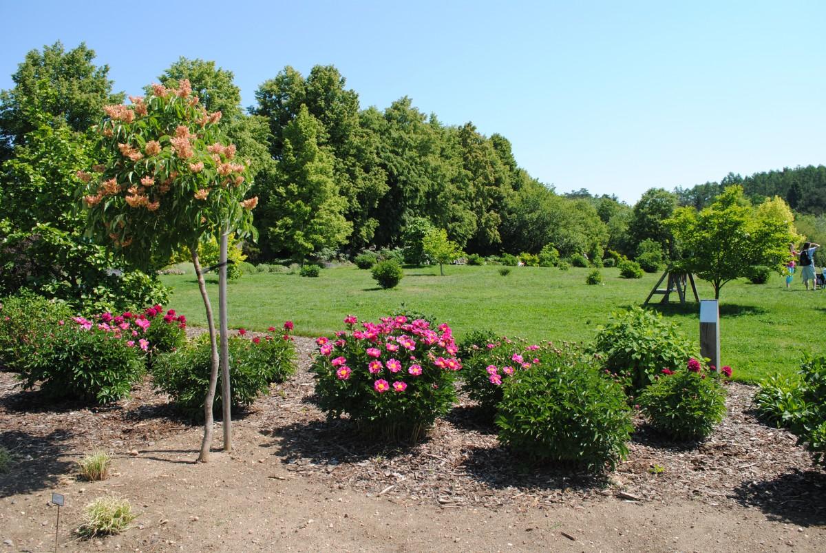 Giardinaggio Teramo Ascoli Piceno - Manutenzione Giardini Abruzzo Marche
